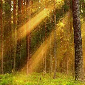 by Alena Ajaja Koutná - Landscapes Forests