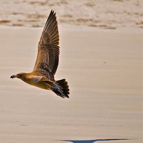 golden wing by Little Shogun - Novices Only Wildlife