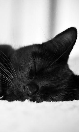 黒猫 live wallpaper