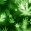 weeds live wallpaper icon