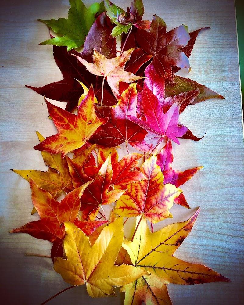 I colori dell'autunno!  di Marilu2019