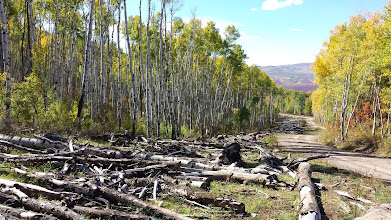 Photo: Clear-cut, old-growth aspen made way for a natural gas pipeline on nearby private land.