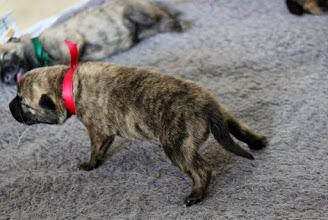 Photo: roze heeft besloten dat het tijd is om op eigen benen te gaan staan ;)