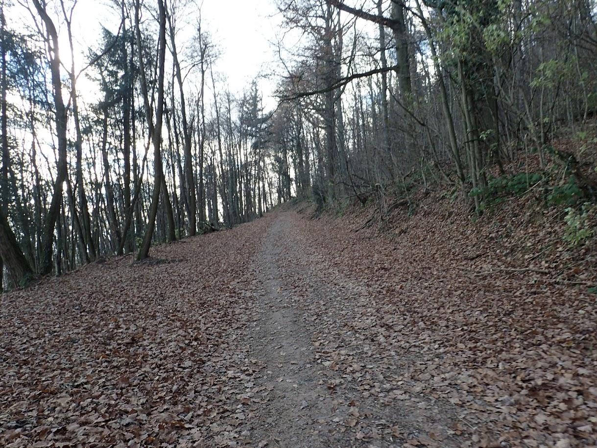 Une fois dans la forêt, je cherche un peu la bonne direction