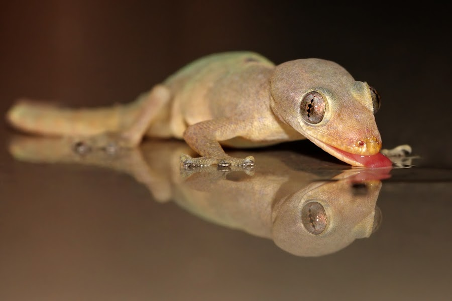by Annemarie Rulos  - Animals Reptiles
