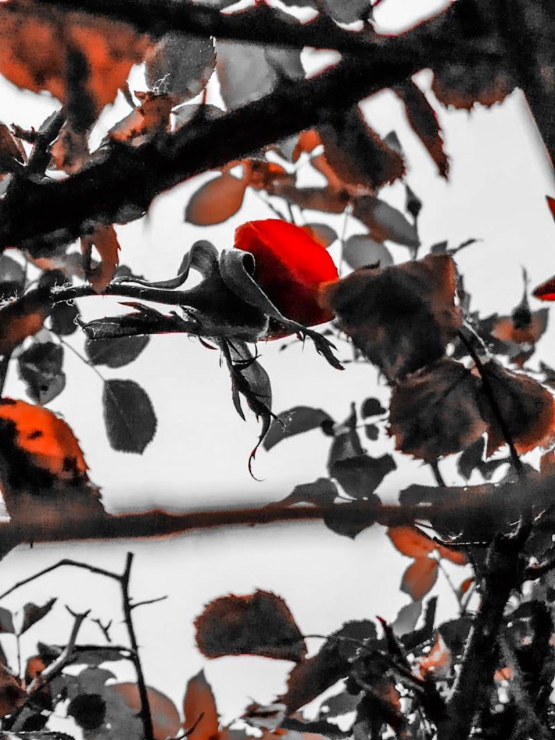Shades of Red Souls di Barbara_