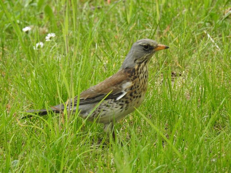 Nimmt der Vogel den Kuchen? Oder will der kleine Vogel wie zuvor  Würmer und Schnecken suchen? Alle anderen Nahrungsmittel sind verändert worden. Wer hätte gedacht, dass so viel gesundes Essen in den kleinen Vogel passen könnte.