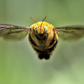 Fly Away by Kuswarjono Kamal - Animals Insects & Spiders