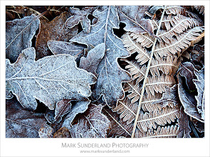 Photo: Frosty Leaves in Old Spring Wood  Here's a rather cold image to suit the current weather conditions! It was taken yesterday morning on a shoot in Nidderdale. Old Spring Wood is just north of Summerbridge on the way to Brimham Rocks and is a lovely patch of oak woodland.  Canon EOS 5D Mk II,EF17-40mm f/4L USM at 40mm, ISO 100, 0.5s at f16