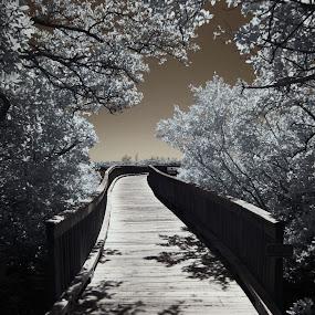 Mangroves I R  by Jeremy Barton - Landscapes Forests ( mangroves, sky, florida, infrared, bridge )