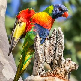 by Denise Flay - Animals Birds