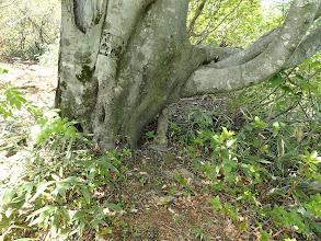 木のたもとに木製の仏様?