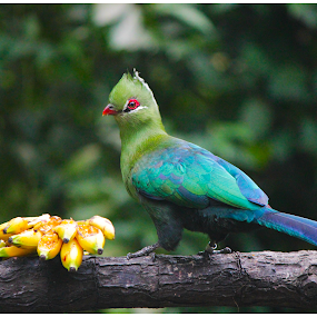 Birdie by Arunkumar Boyidapu - Animals Birds ( bird, green, bananas, tropical, parrot, singapore,  )
