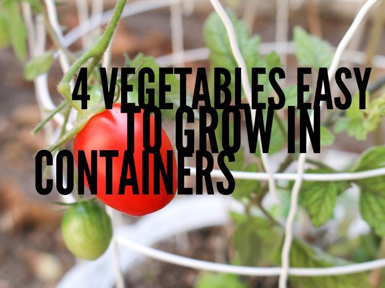 4 Vegetables You Can Easily Grow in a Container