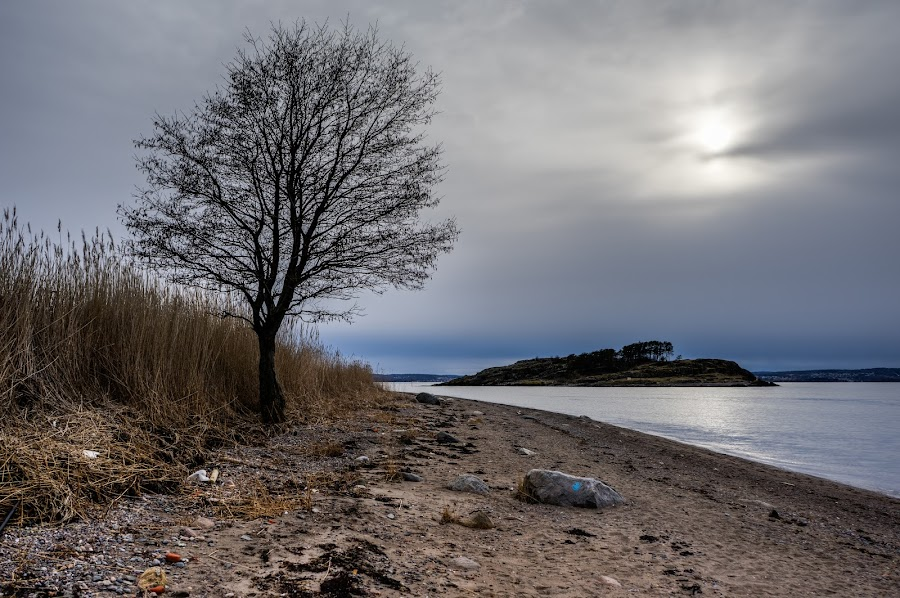 by Dirk Rosin - Landscapes Beaches ( moss, jeløy,  )