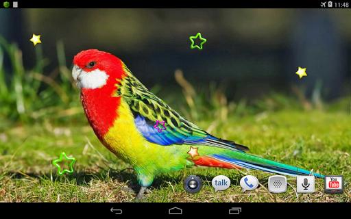 免費下載個人化APP|Parrots Voices cool HD LWP app開箱文|APP開箱王