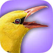 App Icon for iBird UK Lite Free Bird Guide App in Czech Republic Google Play Store