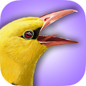 iBird UK Lite Free Bird Guide