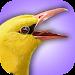 iBird UK Lite Free Bird Guide Icon