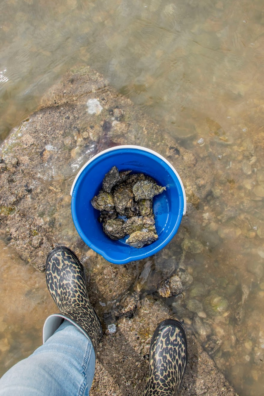 oesters-zeeland