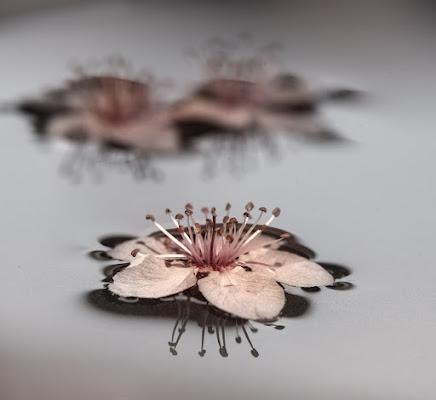 Fiori di primavera di Leyla