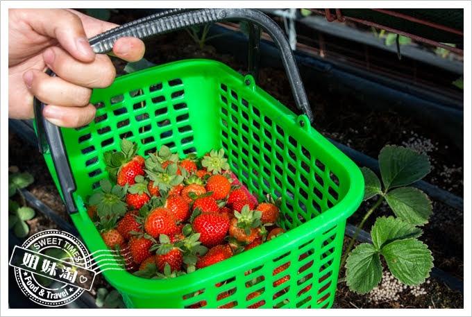 富森草莓園