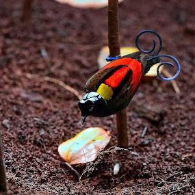 Wilson Bird Of Paradise, Cendrawasih Botak, Willy Ekariyono by Willy Ekariyono - Animals Birds ( wildlife photography, papua, wilson cendrawasih, willy ekariyono, bird of paradise, indonesia, wildlife )