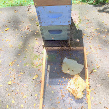 Photo: See the bees processing in