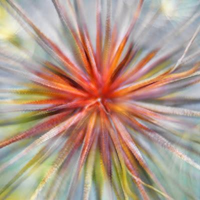 Esplosione di colori di batfabio