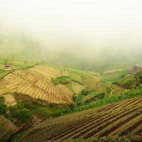 fog enveloped by Krishna Murti - Landscapes Weather ( nature, fog, pwcfoulweather, landscape )