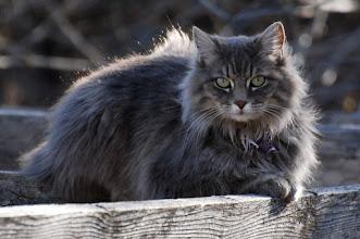 Photo: Stray cat 04/08