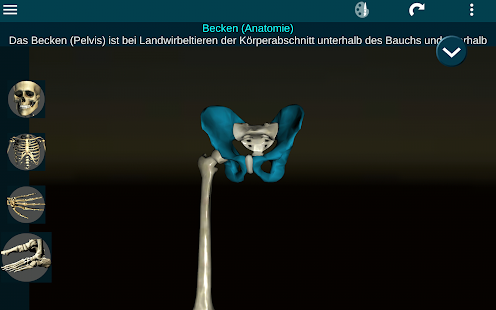 Osseous System 3D (Anatomie) – Apps bei Google Play
