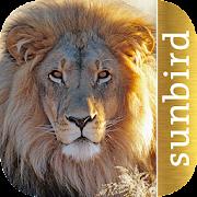 App Icon for Golden Safari Guide App in Czech Republic Google Play Store
