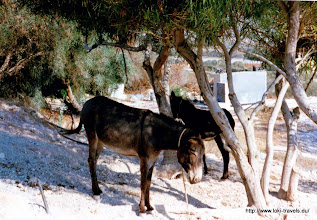Photo: Protaras. Ezeltjes voor ons appartement| Protaras. Donkeys in front of our apartment.
