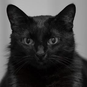 Kormos by Forika Helga - Animals - Cats Portraits