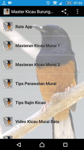 Master Kicau Burung Murai