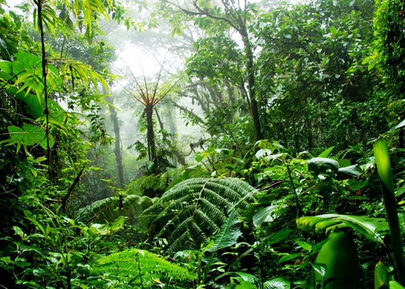 Jadav Payeng, o homem floresta da Índia