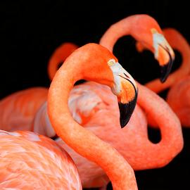 by Patrick Sherlock - Animals Birds