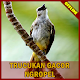 Download Trucukan Gacor Ngropel For PC Windows and Mac