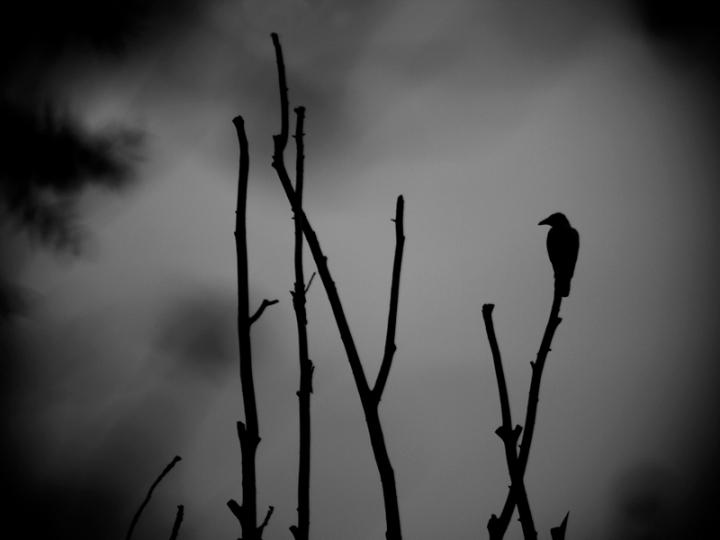 Il corvo / The Crow di Mirko Macari Fotografia