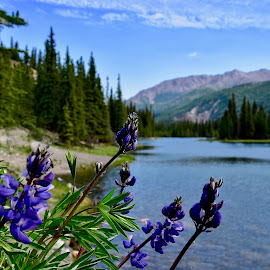 Horshoe Lake - Denali by Jeff Sluder - Flowers Flowers in the Wild ( alaska 2018,  )