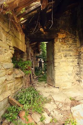 Green house di letiziacaprettiphotography