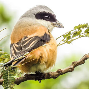 Bird by Jaguar Ricko - Animals Birds ( photo )