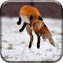 Silly Fox Jump in the Snow APK icon