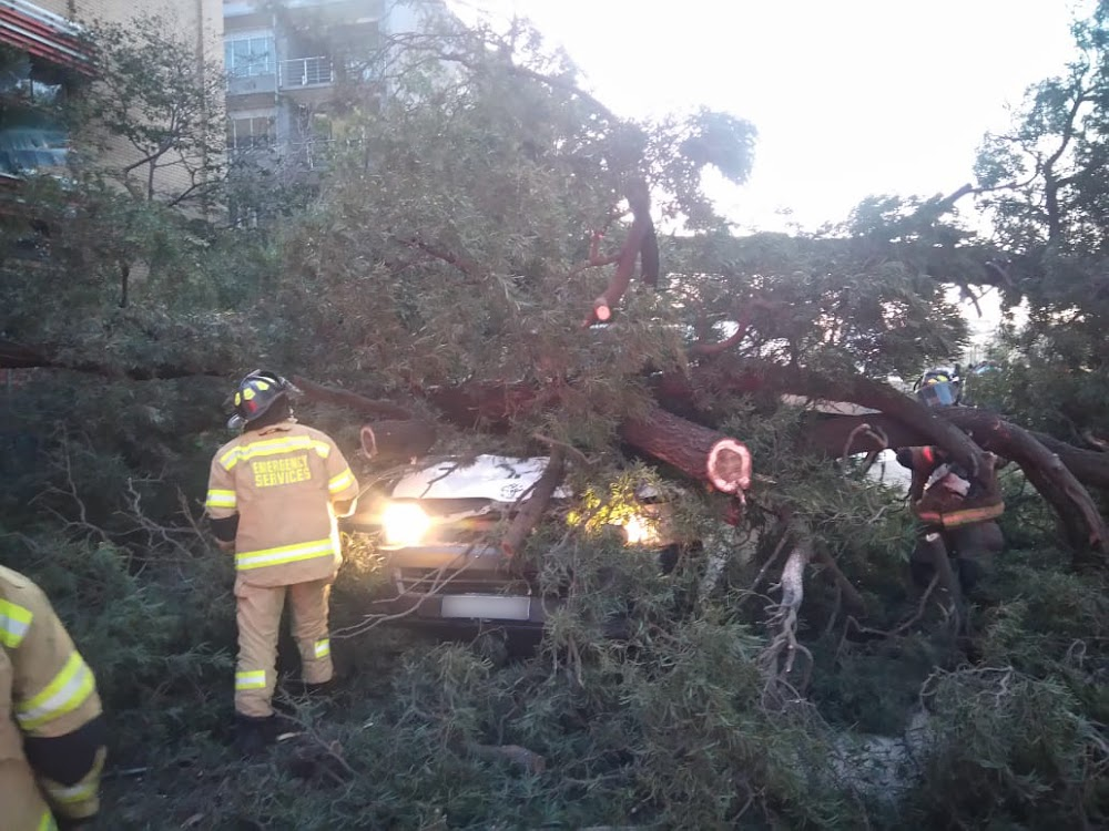 Driver killed, nine injured as falling tree crushes minibus in Gauteng - SowetanLIVE
