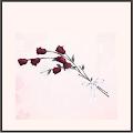 繊細な薔薇