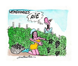 Photo: DUBOUILLON (France)  <Grape picking>