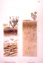 Photo: Suelos de zonas áridas (1= xerorendzina, 2= xerosem)