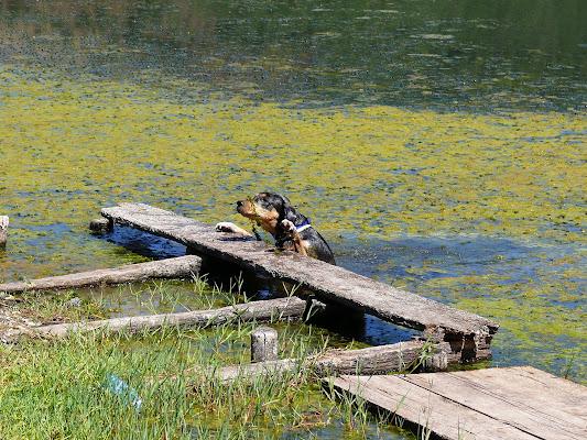 Tuffo nel lago di Claaire