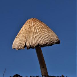 mushroom by Sue Rickhuss - Nature Up Close Mushrooms & Fungi ( fungi, nature, earth, growth, mushroom,  )